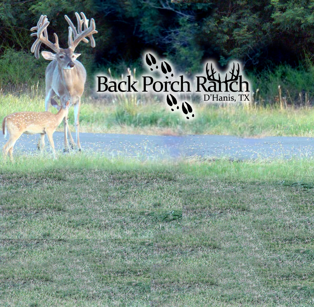 Back porch ranch d 39 hanis tx whitetail trophy hunts for Back porch ranch